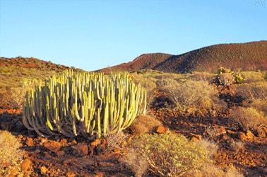Tenerife Natuur
