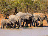 zuid-afrika olifanten